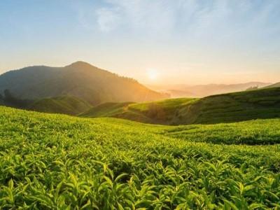 茶叶RFID溯源技术