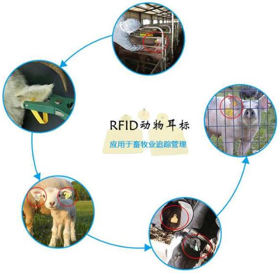 rfid牲畜管理系统