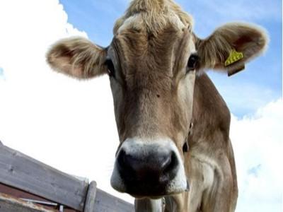 RFID标签在畜牧养殖业的应用