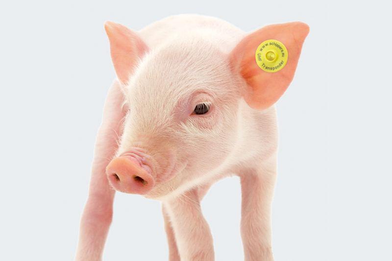 动物耳标5